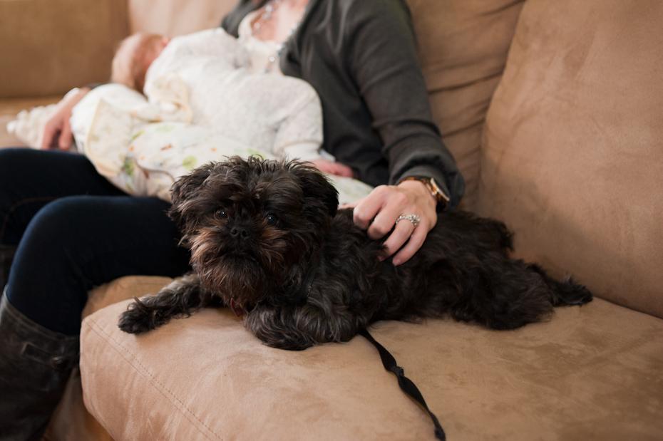 dog protecting newborn