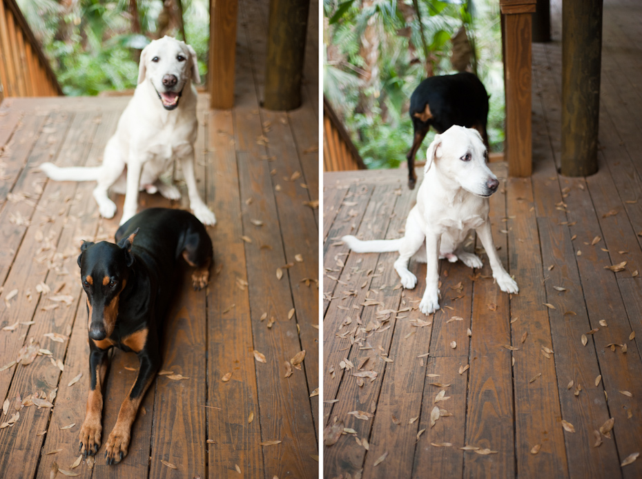 Two dog family