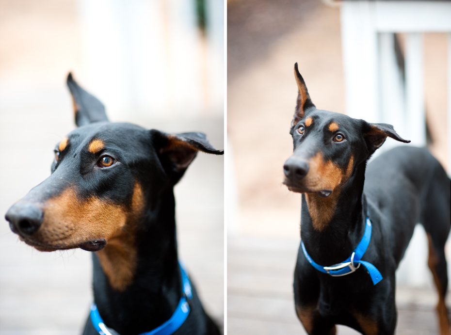 Atlanta Dog Rescue Groups