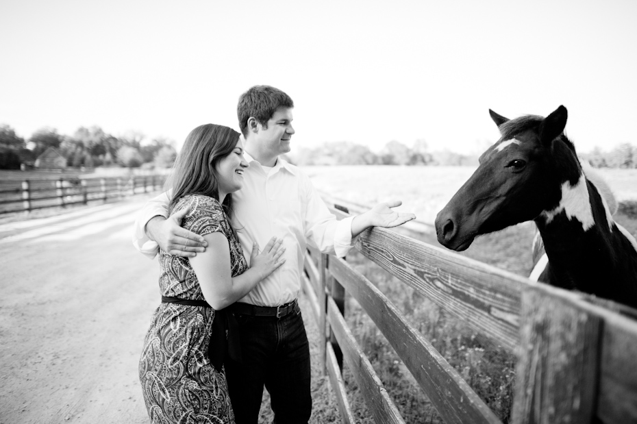 Horse in engagement session