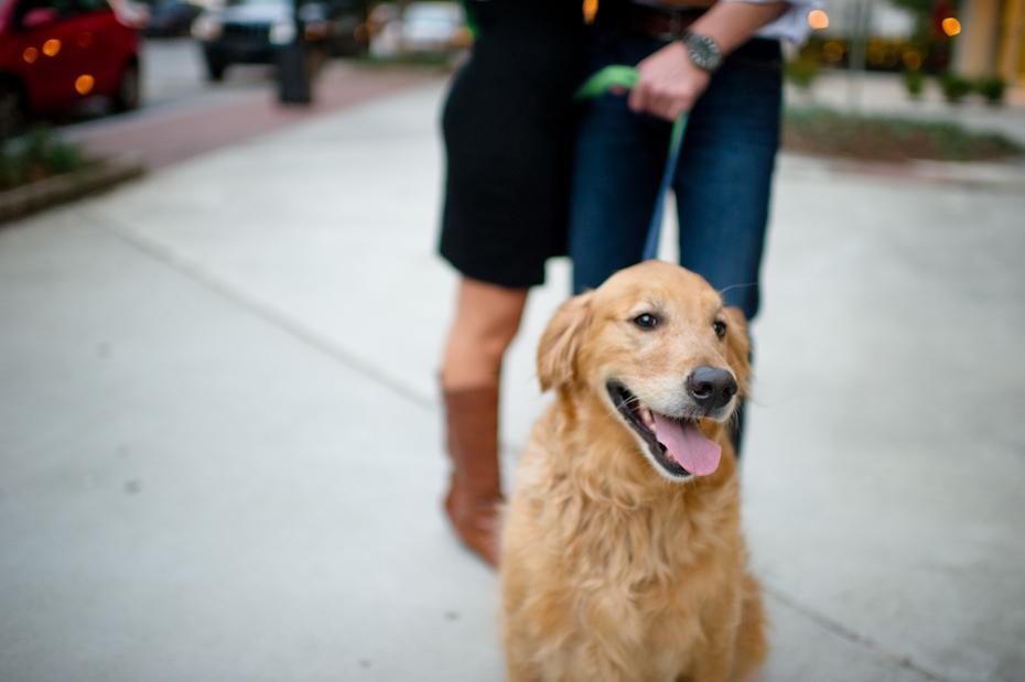 Dog at engagement session