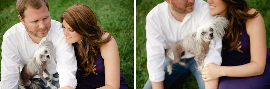 Dog in Engagement Picture