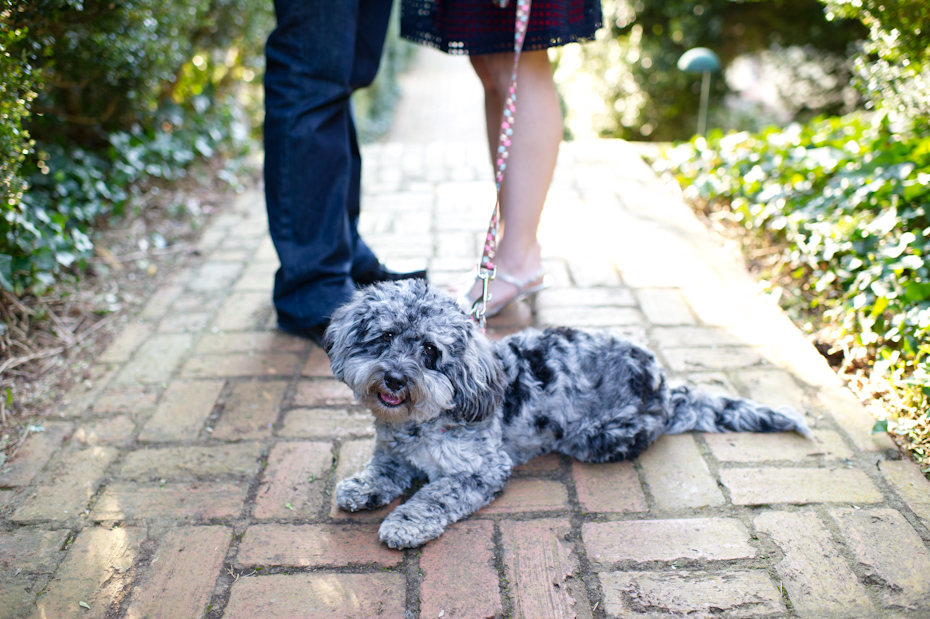 Cute engagement photos with dog