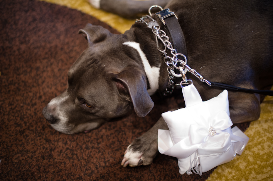 Dog Ring Bearer Photo
