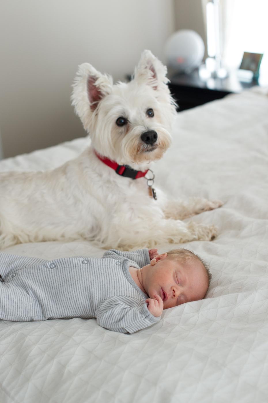 Dog and newborn baby