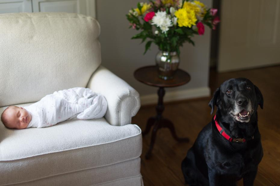 Newborn and Dog Photos