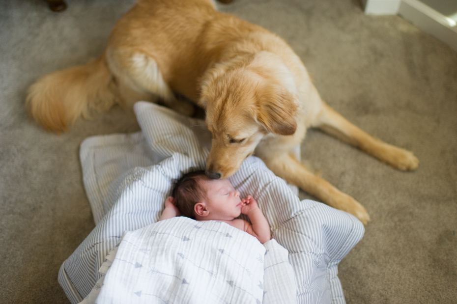 Newborn pictures with Dog